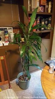 """Indoor Potted 66"""" Palm Plant"""