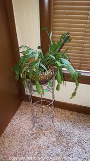 Plant Stand w/Christmas Cactus