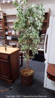 Silk Ficus Tree Decor w/Lights
